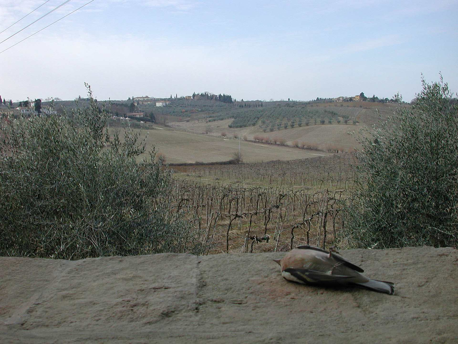 Tuscany, Tavarnelle Val di Pesa, The road is long