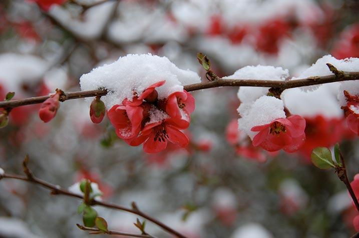 Photography Pastorale, Allier, garden, snow