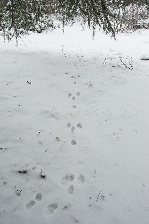 pastorale, foto collage 7, sneeuw