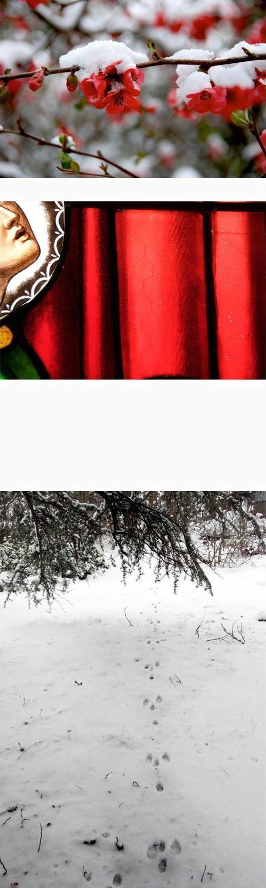 pastorale, snow on flower, stained glass, squirrel tracks in the snow, red accents